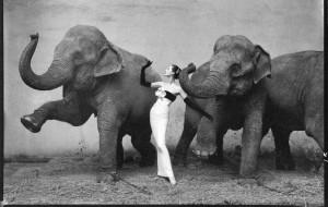 elefántos csaj1_n